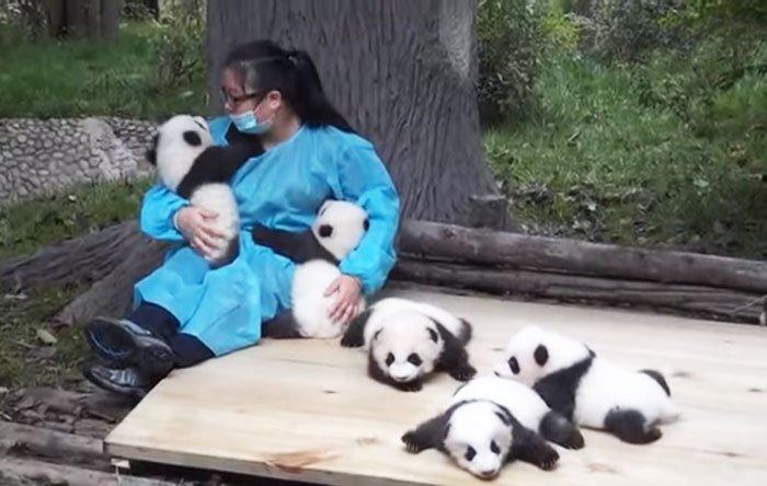 nounou-panda-chine-offre-d-emploi-1