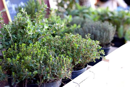 4462708884-herbes-de-provence-p