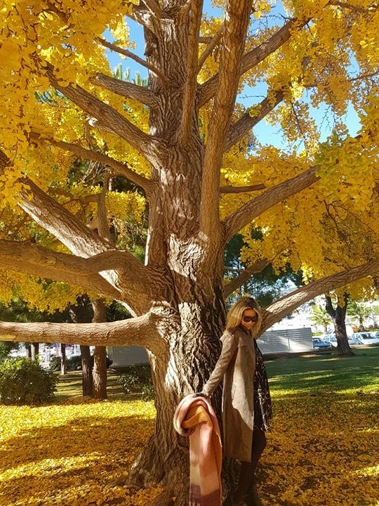 arbre-croisette