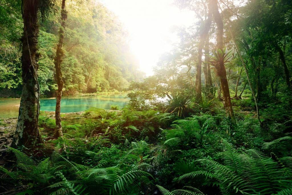 behang-van-een-meer-in-de-jungle_9