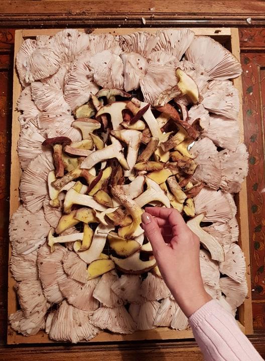 clayette-champignons