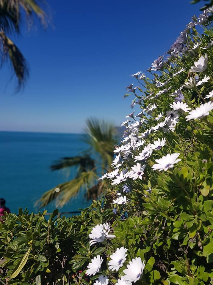 fleurs-mano