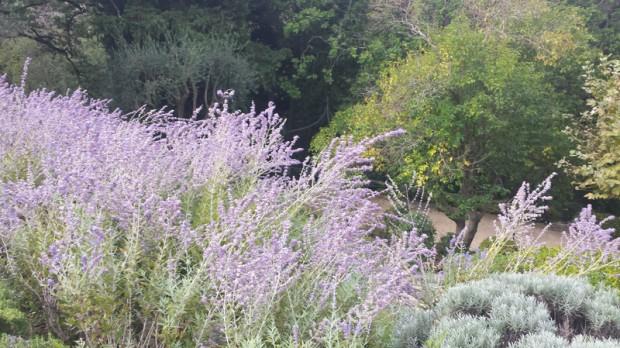 jardin_mas_candille