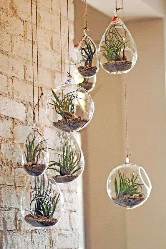 plantes suspendues tendance